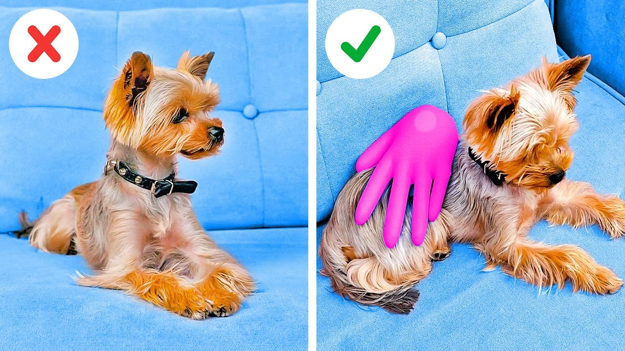 Priceless Hacks And Gadgets For Dog Owners