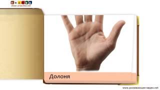 Картки для дітей від 1 року - Частини тіла за метод. Домана
