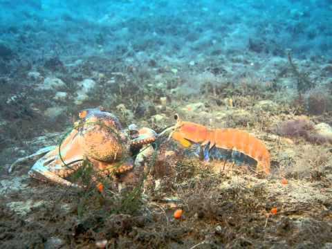 imax deep sea 3d 1080p movies