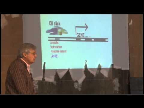 Making Transgenic Fish To Detect Pollutants In Water | Daniel Nebert | TEDxCincinnatiChange