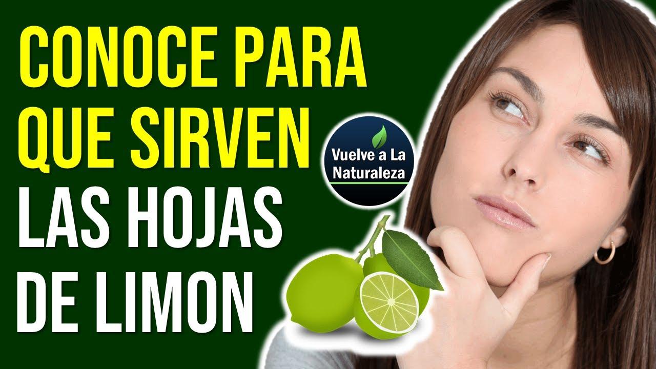 Para Que Sirve Las Hojas De Limon Youtube
