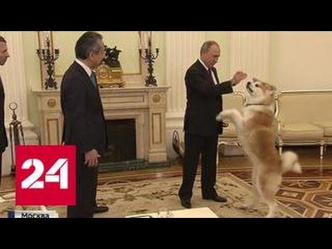 Под охраной собаки: Путин рассказал японским журналистам о Курилах и терпении