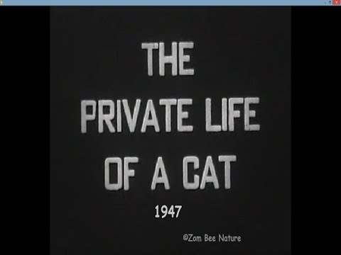 The Private Life Of A Cat - 1947