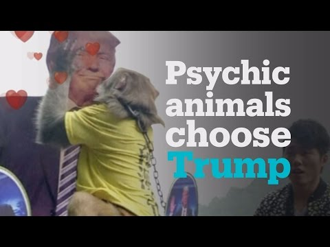 Adorable psychic animals predict Donald Trump's win