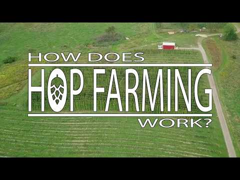 How Does Hop Farming Work?