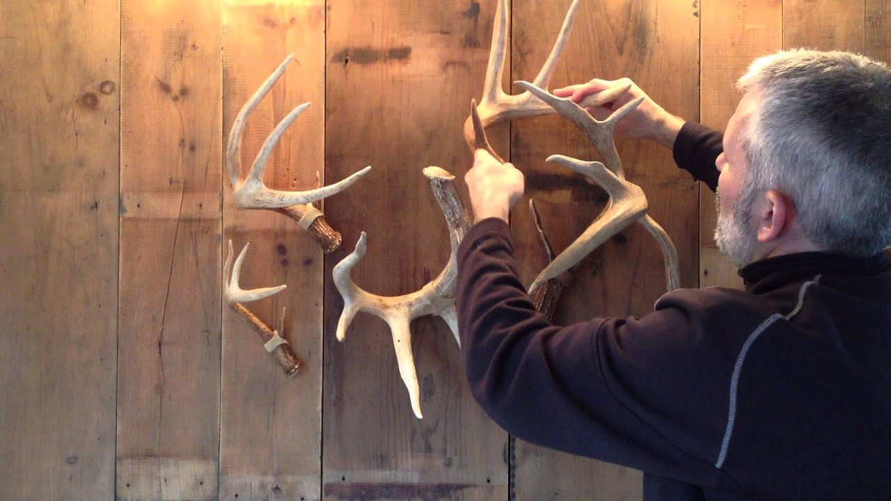 Shed antler display straps showtines com youtube