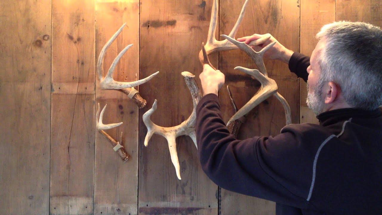 Ideas to Display Deer Antler Sheds