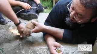 Rudy the Kitten