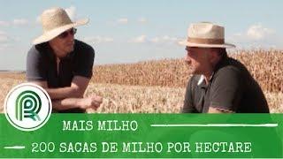 """Solo """"ruim"""" produz 200 sacas de milho por hectare. Saiba como"""