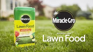 How to Use Miracle-Gro® Water Soluble Lawn Food