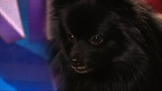 Britain's Got Talent 2015 S09E03 Princess the Hypnodog - Not Much More to Say