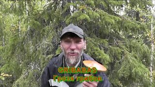 GRIBABAS-Гроза грибов (трейлер канала).