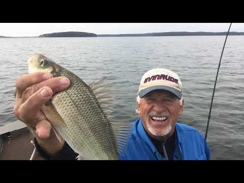 Back To Lake Monticello From Salt Water Part 2 Of 2