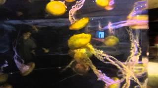 крутой аквариум. огромные медузы. Las Vegas 2013