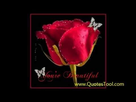 beautiful  red Roses whishes quotes