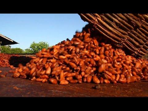 CHOCOLATE: Produção e Mercado