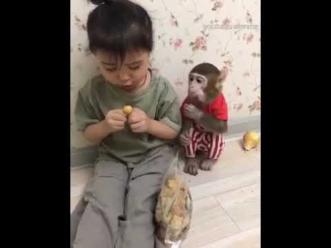 У девочки в Японии живёт обезьянка