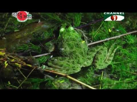 Nature and Life   Episode 34 Endangered Wildlife of Bangladesh 02