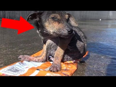 The Dog Who Lost His Leg Never Lost Hope! Most Touching Rescue Ever
