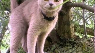 Кошки смешные видео под музыку  Прикольные кошки   это интересно  Смешная подборка