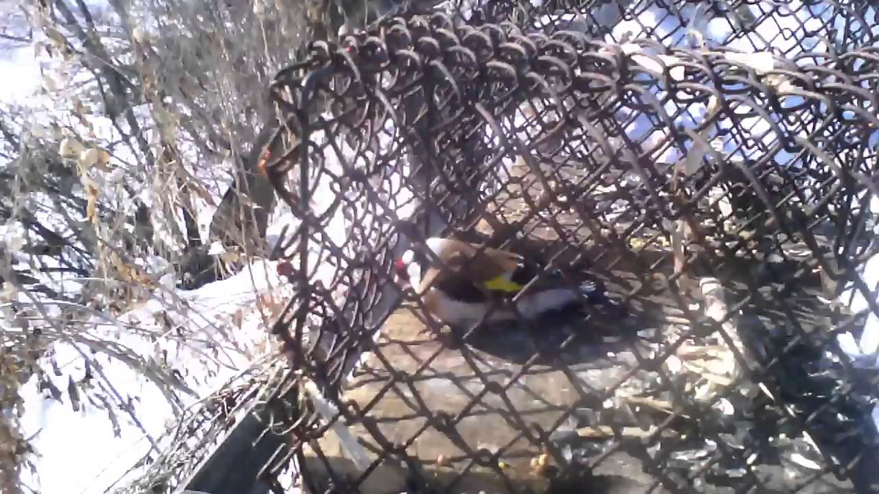 Лучок для ловли птиц своими руками фото 338