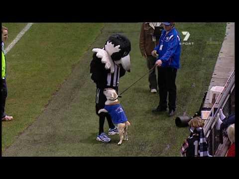 Western Bulldog takes down the Collingwood mascot