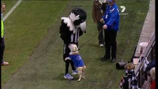 Western Bulldog Takes Down The Collingwood Mascot