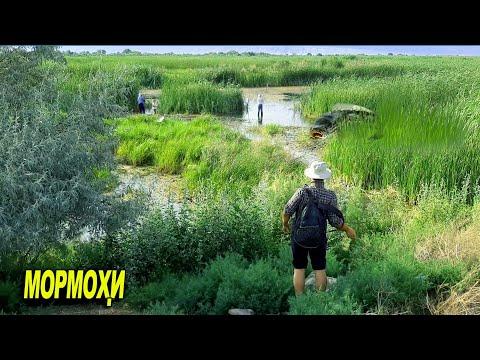 Рыбалка в Таджикистане. г Канибадам Ловля Змееголова