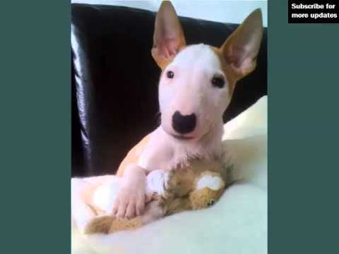 Dogs Picture Collection Of Puppy Terrier Bull | Picture Ideas Of Dog Breeds