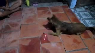 hài hước khi xem thú cưng bị lừa