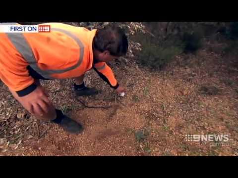 Citizens Arrest | 9 News Perth
