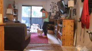 How To Train Your Dog To Dance Clip 04