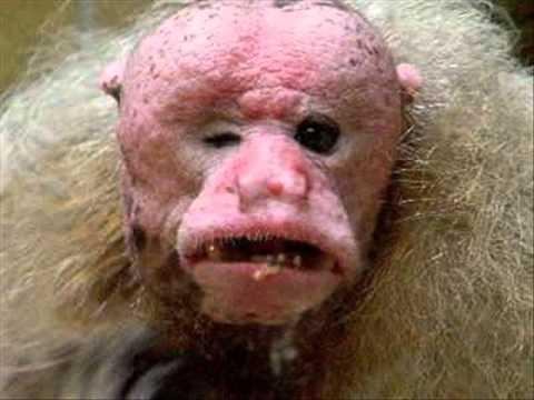 gli animali più brutti del mondo.wmv