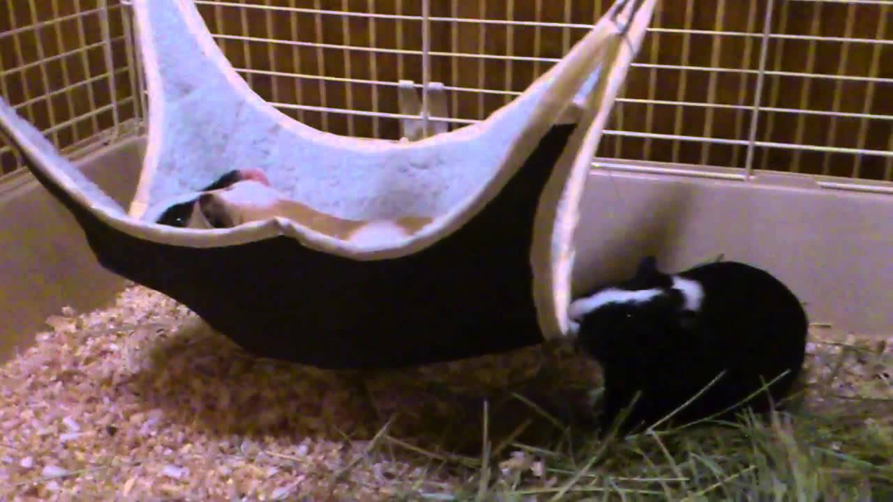 Гамак для свинки своими руками фото