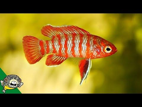 Exciting 10 Gallon Fish Tank Ideas.