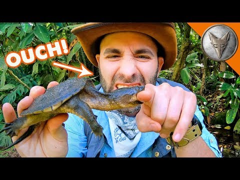 Snapping Turtle BITES Me.. AGAIN!