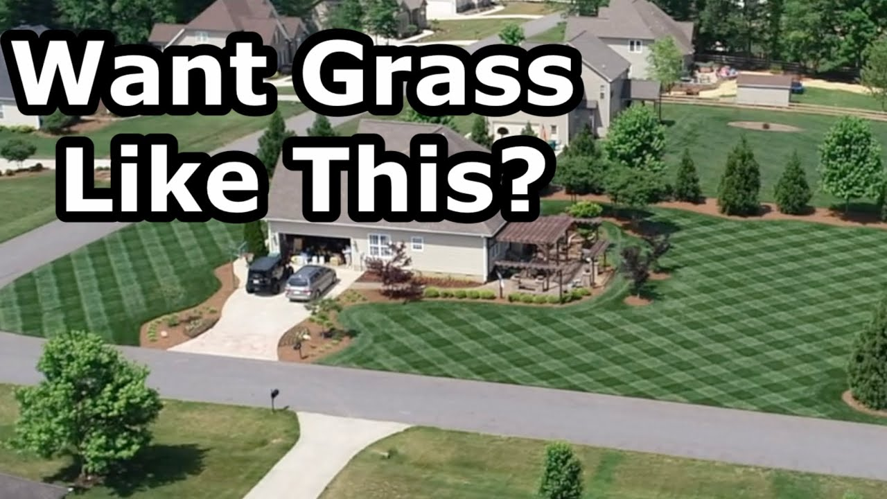 Which GRASS SEED is Best for YOU?