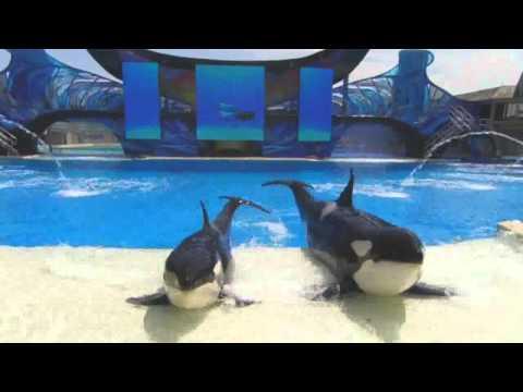 SeaWorld One Ocean Full Show (DVD Version)