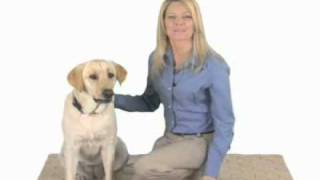 Treating Your Dogs Joint Pain Rimadyl