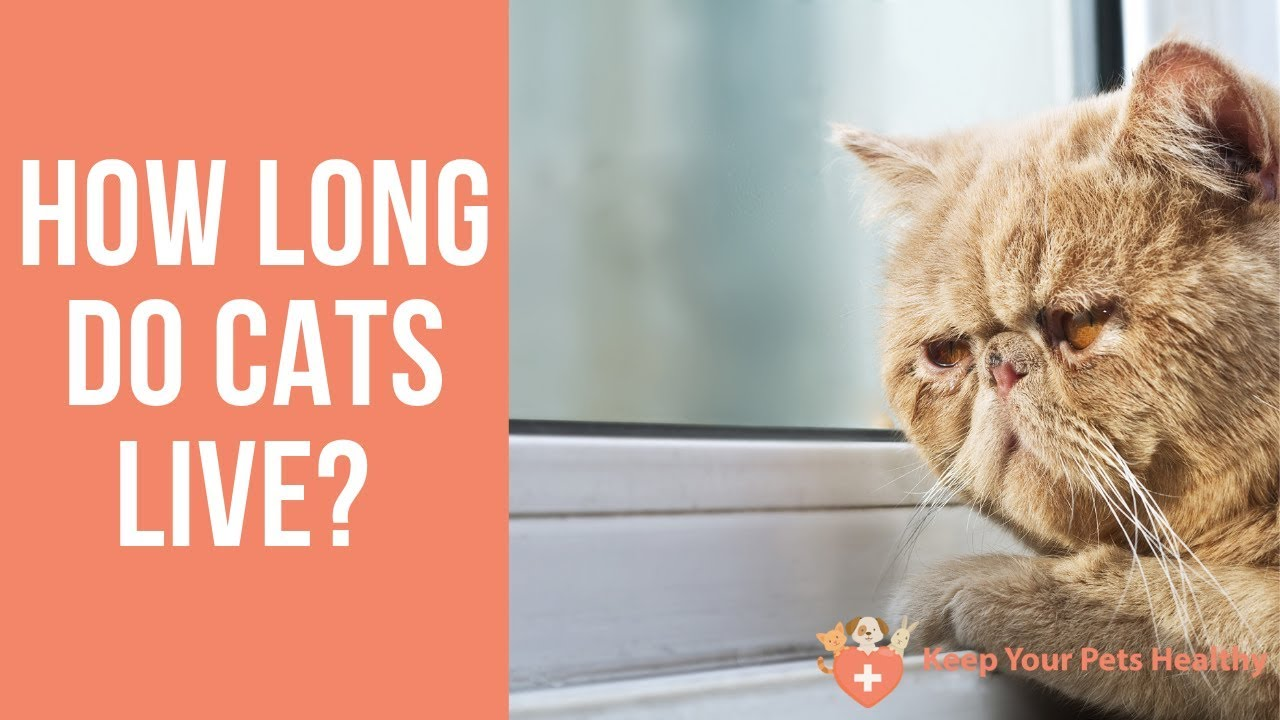 how long do cats live - 1280×720
