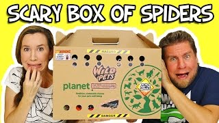 Moose Mystery Box Of Wild Pets Spiders