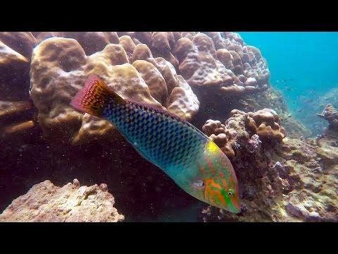 Snorkeling Coral Island, Phuket, Thailand