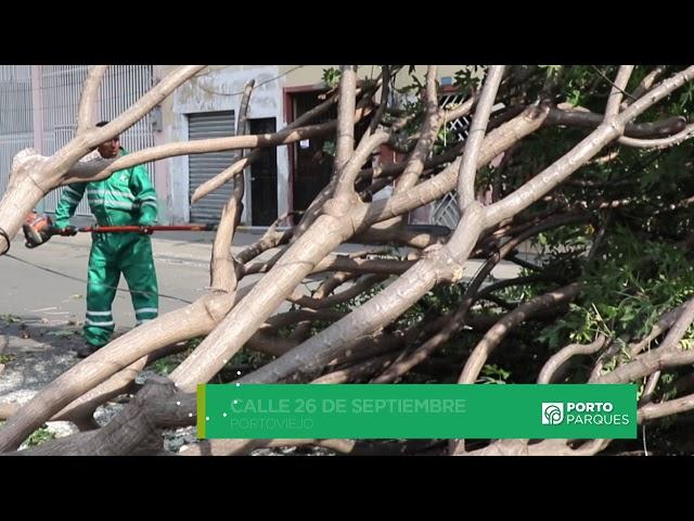 Caida de arbol parque El Mamey