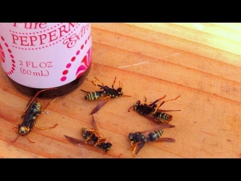 how-to-get-rid-of-wasps-naturally