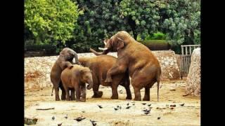 Смешные видео про животных с озвучкой