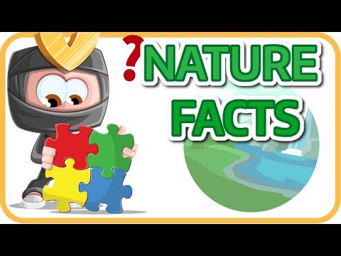Nature Facts | Learning English Science For Kids
