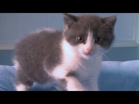 Copy cat: Chinese firm creates first cloned kitten | AFP