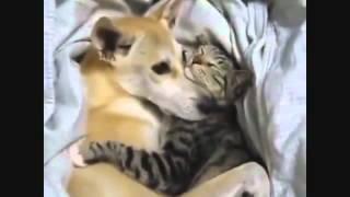 حركات مضحكة لبعض الحيوانات سبحان الله