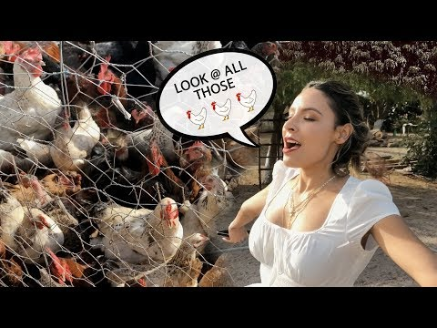 DESI FOUND HER CHICKENS IN MEXICO | THE PERKINS thumbnail