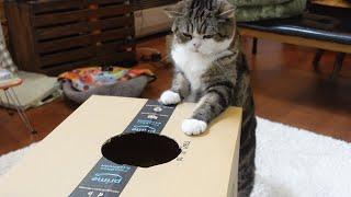 いろいろなねこ25。 -Cat's various videos 25.-